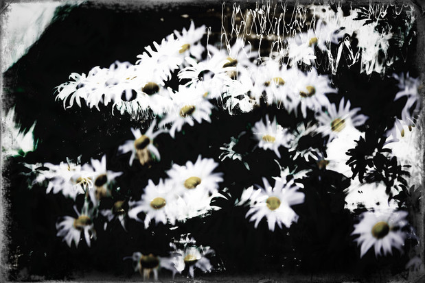 The Garden of Persephone 028