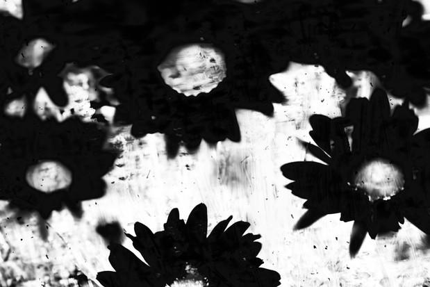 The Garden of Persephone 014