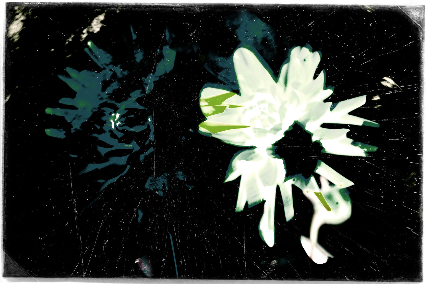 The Garden of Persephone 046