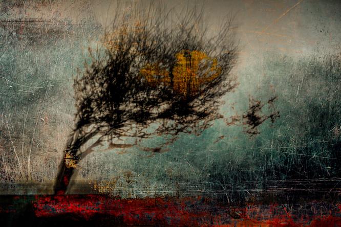 The Wishing Trees 029.jpg
