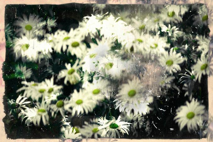 The Garden of Persephone 036
