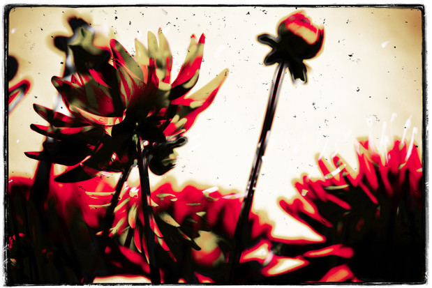 The Garden of Persephone 001