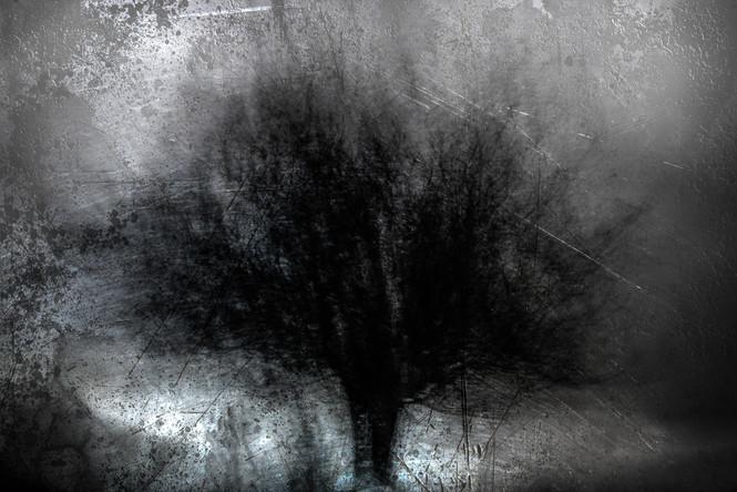 The Wishing Trees 004.jpg