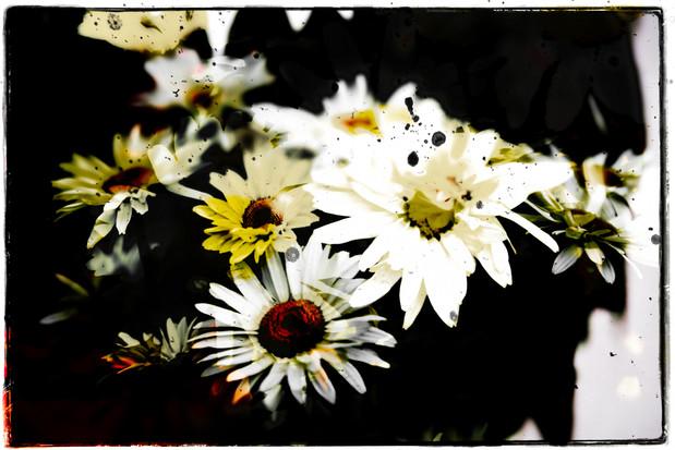 The Garden of Persephone 024