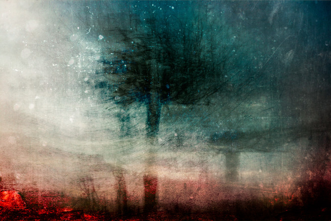 The Wishing Trees 006.jpg