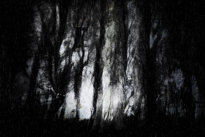Creep (Copse) 014