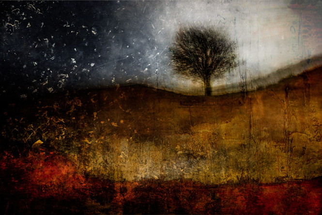 The Wishing Trees 025.jpg