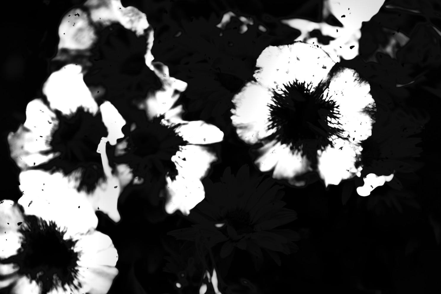 The Garden of Persephone 006