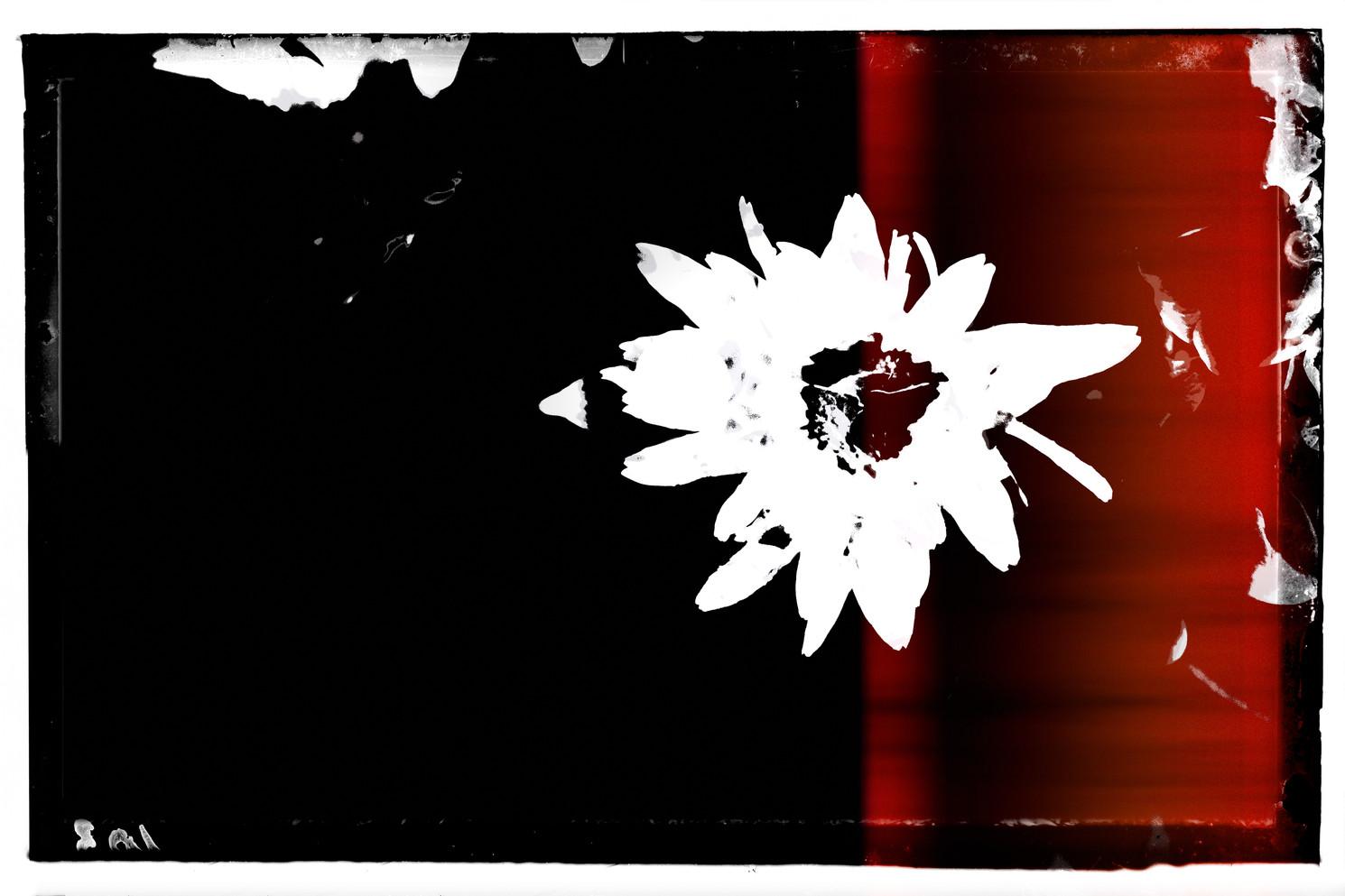 The Garden of Persephone 039