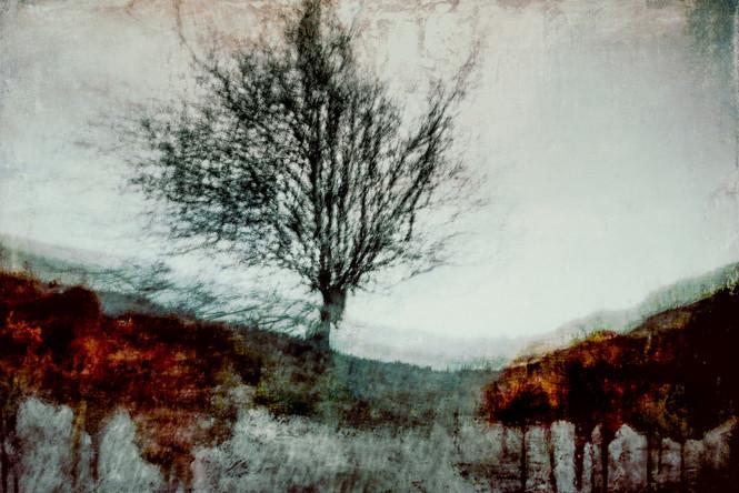 The Wishing Trees 0020.jpg