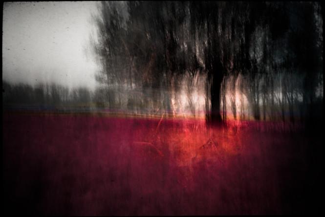 The Wishing Trees 019.jpg
