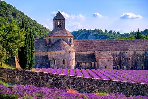 FR_Provence_Blooming purple lavender fie