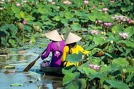 MEK_VN_Mekong Delta_Lotus pond_Get 51828
