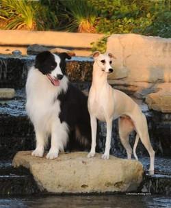 Kenya & Tawny