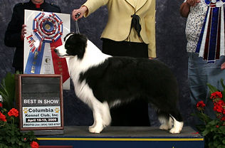 KENYA GCH Sportingfields Reflections O' Borderfame