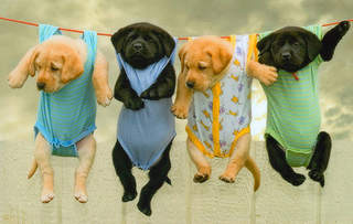 dogs on cclothesline