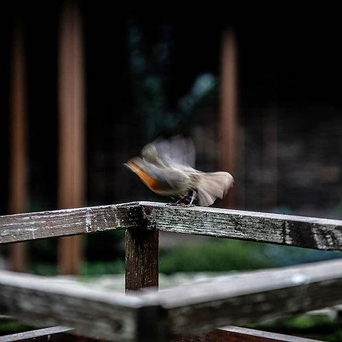 Vuela . . . #fly #moments #art #artofthe