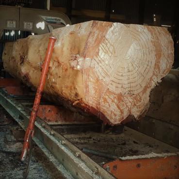 Timber Mill 2.jpeg