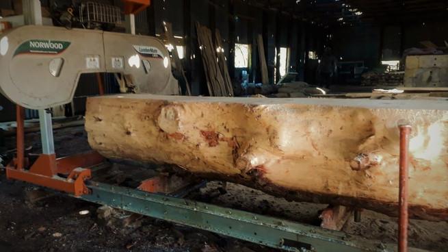 Timber Mill 1.jpeg