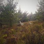 Nature 6.jpeg