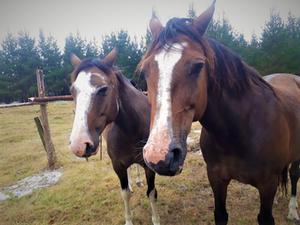 Horses 1.jpeg
