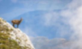Parc naturel regional du Vercors lionel