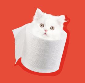 quarantine_cat.jpg
