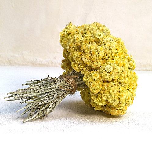 Bouquet d'immortelles séchées de la Cova Fumada