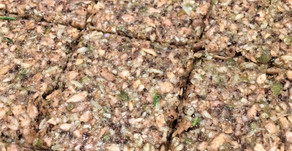 Seed Crackers (GF)