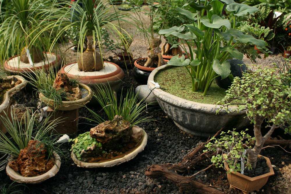 Variety of potted tropical plants