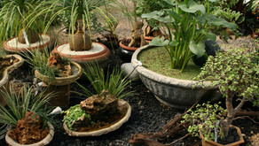 Rośliny w naszych domach.