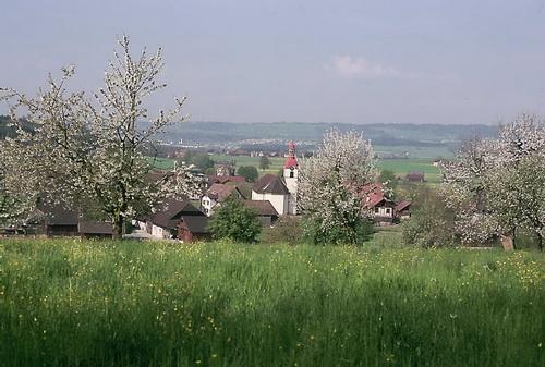 Frühling in Niederwil