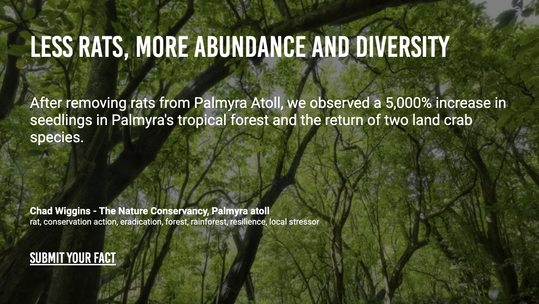 Less Rats, More Abundance and Diversity