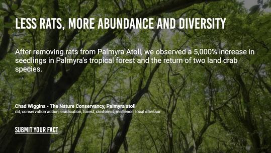 Less Rats, More Abundance and Diversity