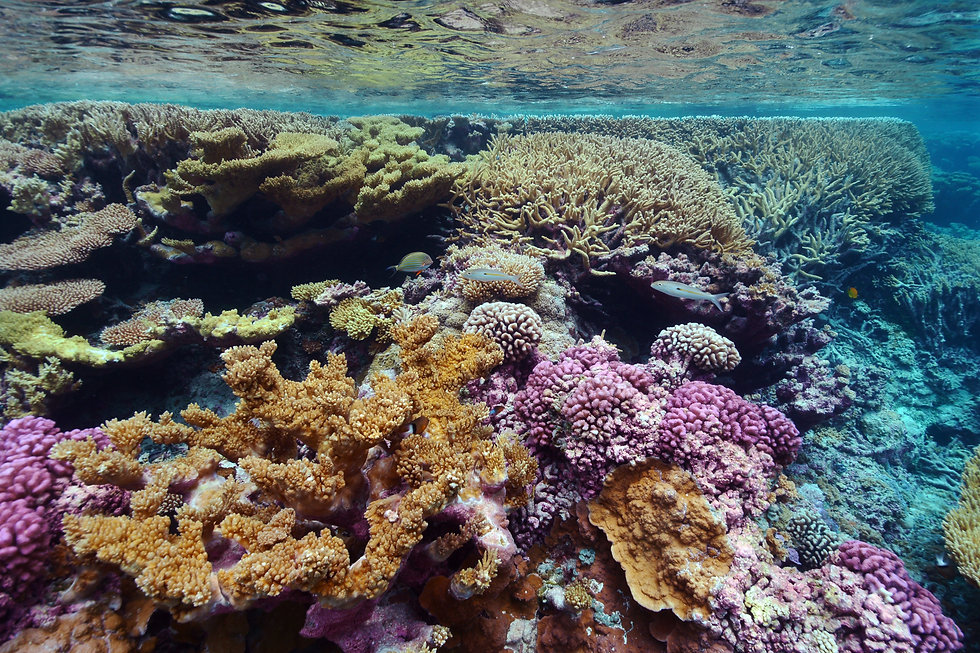Coral Gardens.jpg