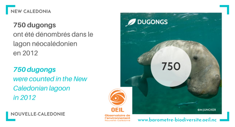 Dugongs in New-Caledonia