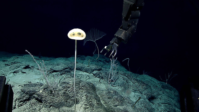Pigafetta Seamount in the eastern Pacific