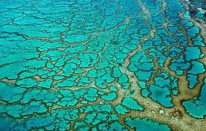 Coral reef lagoon 2.jpg