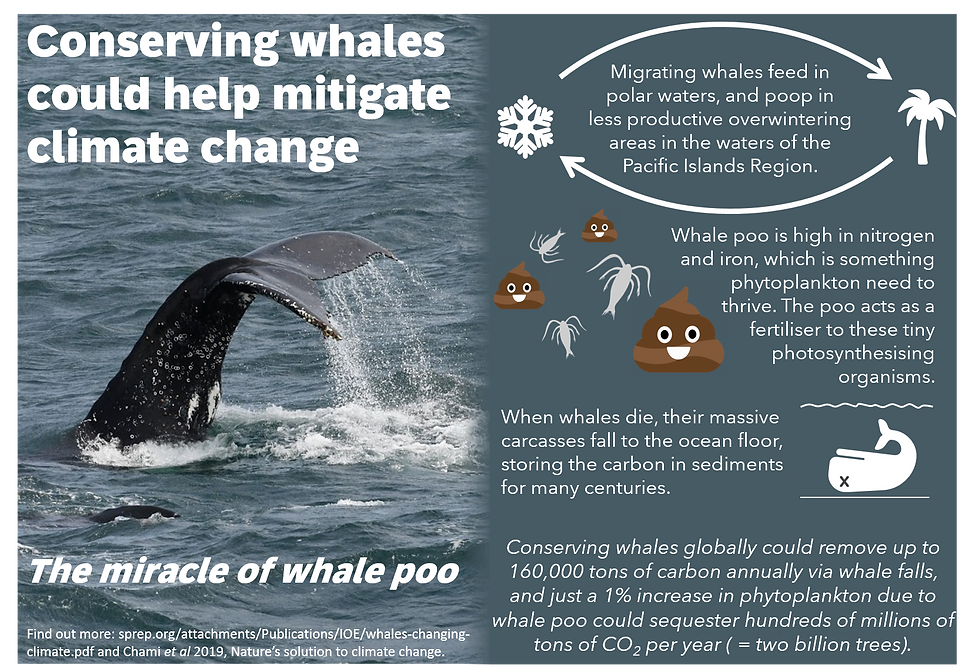 whales_climate_change_mitigation.png