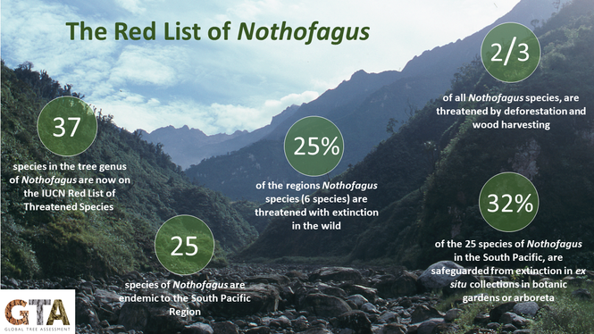 The Red List of Nothofagus