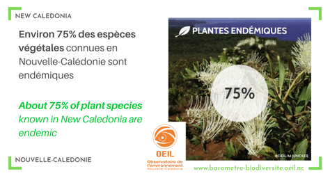 Plant endemism in New-Caledonia