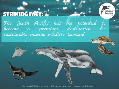 Sustainable Marine Wildlife Tourism