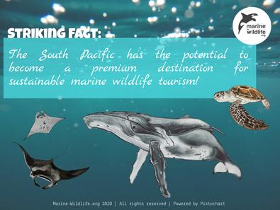 Sustainable Marine Wildlife Tourism