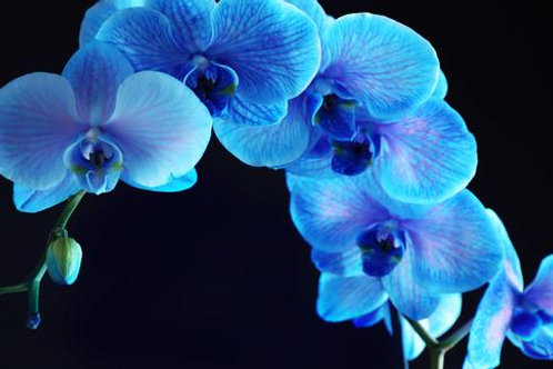 #025 BLUE ORCHID GLASS