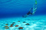 Snorkeling Tours or Swim with Whale Sharks in Isla Mujeres, Mexico