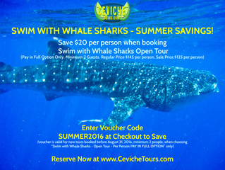 Swim with Whale Sharks Summer Savings