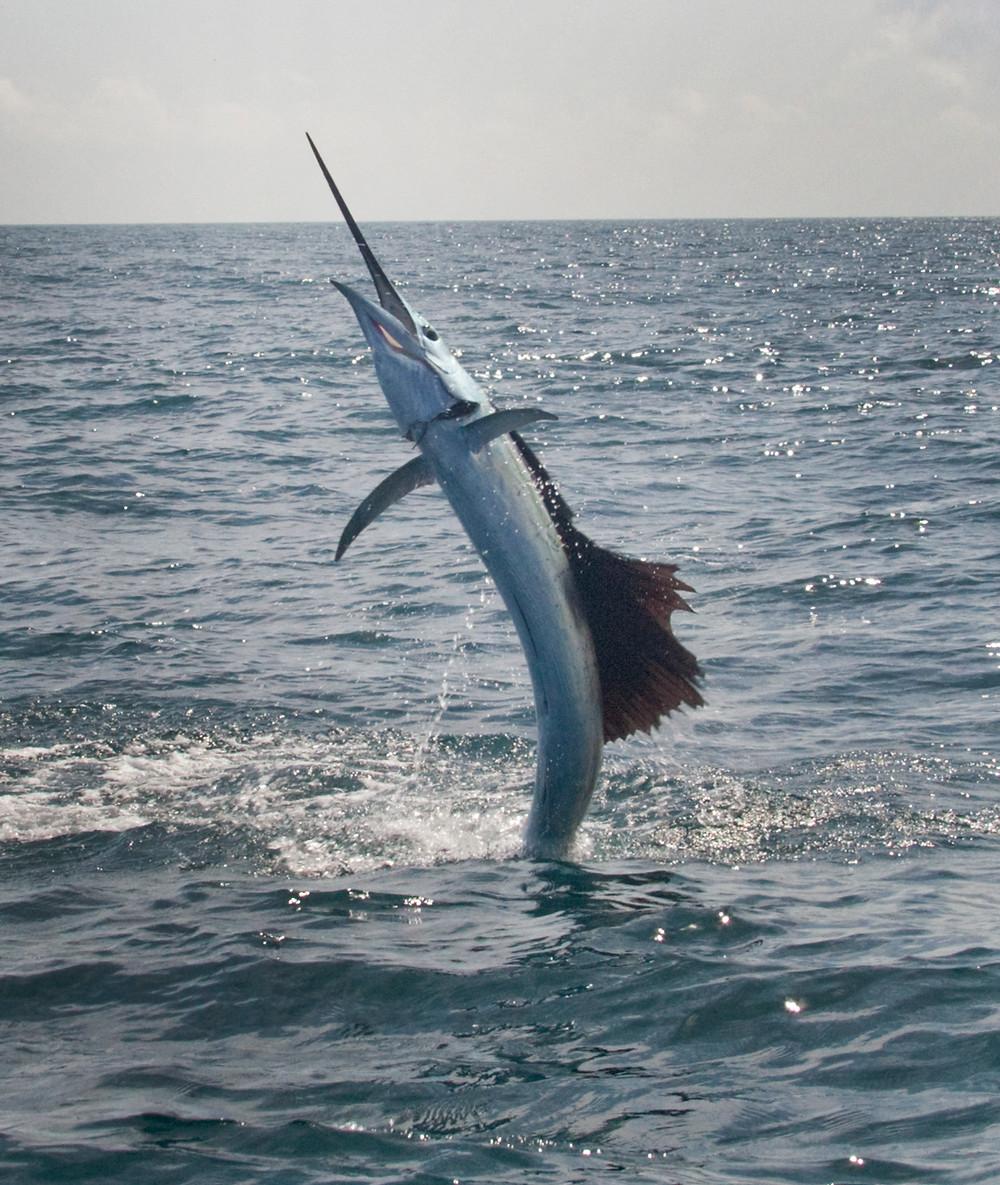 Sportfishing in Mexico