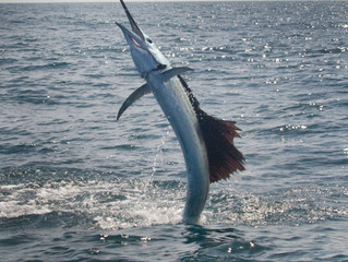 Sailfish: A Sportfishing Adventure