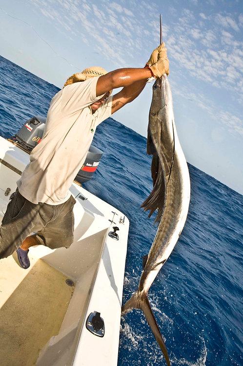 Full-day Sport Fishing Charter