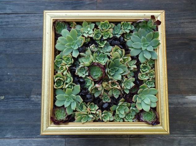 Sziklakerti növények régi képkeretben